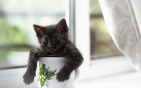 Picture cat, house, window, mug