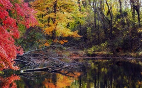 Picture pool, water, autumn, fall, foliage, woodland