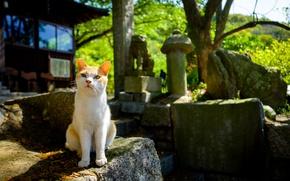 Wallpaper cat, background, cat