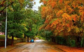 Wallpaper Road, Autumn, Trees, Machine, Car, Fall, Foliage, Autumn, Road, Trees, Leaves