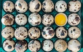 Picture macro, eggs, 24 PCs