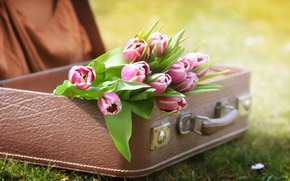 Wallpaper nature, tulips, grass, suitcase, flowers