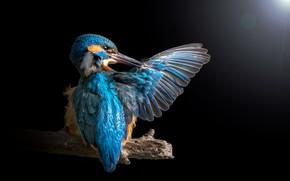 Picture light, bird, branch, wing, Blik, Kingfisher