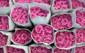 Wallpaper background, roses, flowers