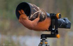 Picture protein, pipe, camera, interesting
