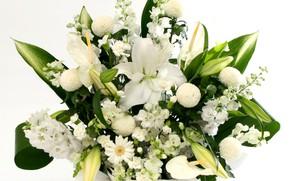 Picture white, Lily, bouquet, Daisy, chrysanthemum, Anthurium, gillyflower