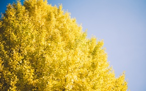 Picture the sky, tree, yellow leaves
