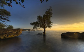 Picture lake, stones, tree, rocks