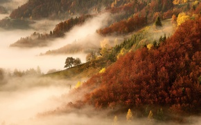 Picture autumn, forest, trees, nature, fog, morning
