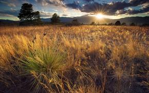 Picture The sun, Field, Grass