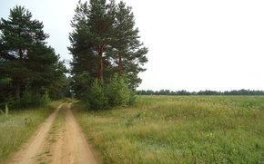 Picture road, field, summer, the sky, trees, pine