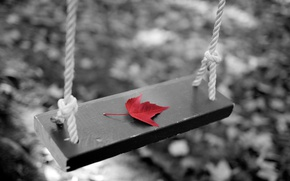 Picture autumn, sheet, swing