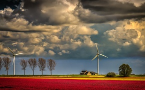 Picture field, the evening, windmills