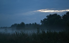Picture forest, grass, sunset, fog, silence, the evening, peace