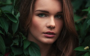 Picture greens, look, girl, face, foliage, portrait, makeup, hairstyle, brown hair, closeup