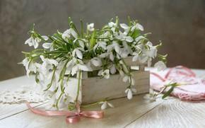 Picture spring, snowdrops, box, bow