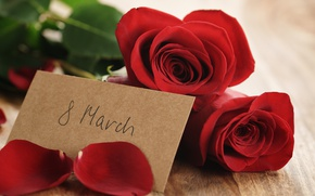 Wallpaper bouquet, petals, red, March 8, romantic, gift, roses, red roses