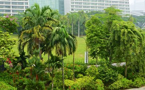 Picture greens, trees, flowers, tropics, Park, palm trees, home, Singapore, the bushes, Gardens By the Bay