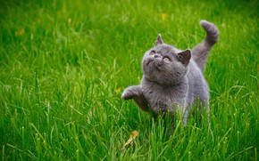 Picture cat, grass, cat, kitty, kitty
