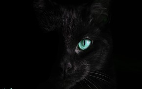 Picture cat, black, turquoise eyes