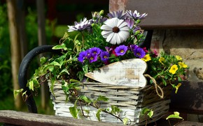Picture flowers, flowerbed, Petunia