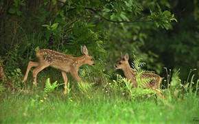 Picture forest, grass, calves