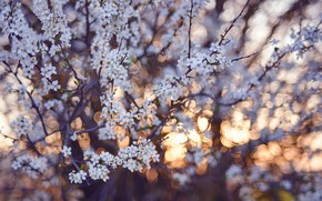 Picture background, tree, flowering