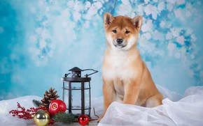 Picture gift, dog, flashlight, puppy, fabric, branch berries