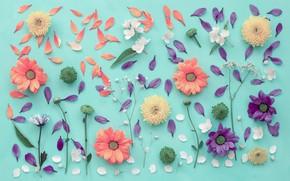 Picture flowers, background, petals, chrysanthemum