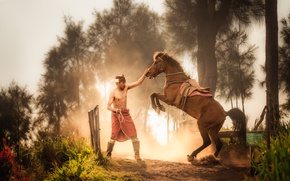 Picture man, horse, training
