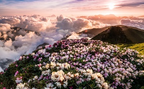 Picture the sky, the sun, clouds, rays, landscape, flowers, mountains, nature, fog, dawn, hills, view, spring, …