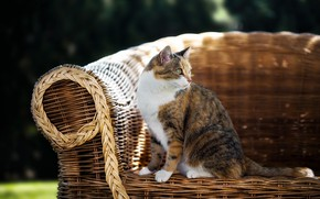 Picture cat, summer, chair