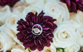 Picture flowers, stone, bouquet, ring
