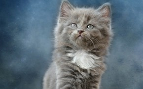 Picture Kitty, Background, Baby, Kitty