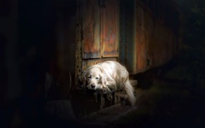 Picture house, each, dog