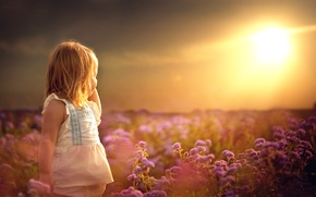 Picture field, summer, the sun, flowers, girl