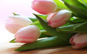 Picture leaves, spring, petals, tulips