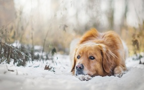 Picture winter, snow, mood, dog