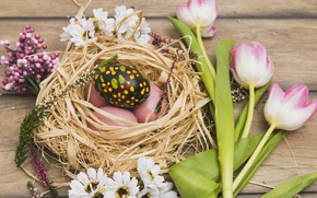 Picture Flowers, Tulips, Easter, Eggs, Socket