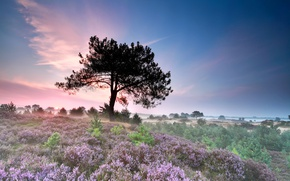 Wallpaper field, grass, flowers, fog, tree, morning, the bushes