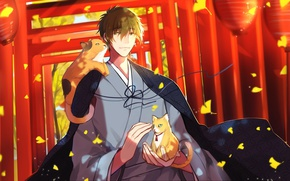 Picture autumn, the wind, lights, guy, Japanese clothing, torii, free, tachibana makoto, red gate, red kittens, …