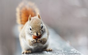 Picture protein, grey background, nibbles, nut