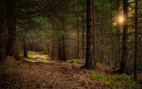 Picture forest, Norway, Norway, Nordland, Sandnes