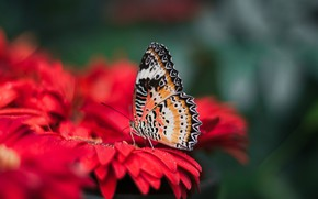 Wallpaper blur, bright, wings, butterfly, nature, flower