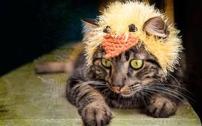 Picture cat, cat, look, face, pose, grey, background, model, hat, dark, portrait, treatment, paws, mask, lies, …