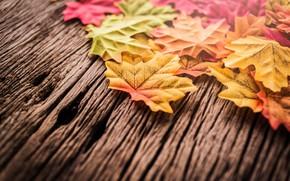 Wallpaper maple, autumn, background, wood, tree, leaves, autumn, leaves, background, autumn