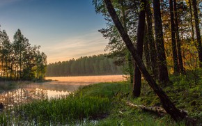 Picture forest, grass, water, trees, sunset