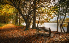 Wallpaper pond, autumn, lake, Cumbria, leaves, trees, bench, England, Park