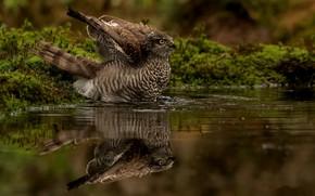 Wallpaper nature, bird, reflection, water