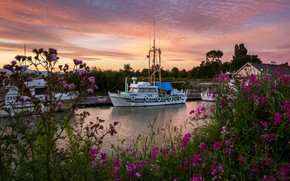Picture the sky, flowers, river, Canada, boat, Canada, rivers, sunsets, Marinas